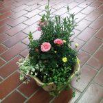 春の草花の寄せ植え