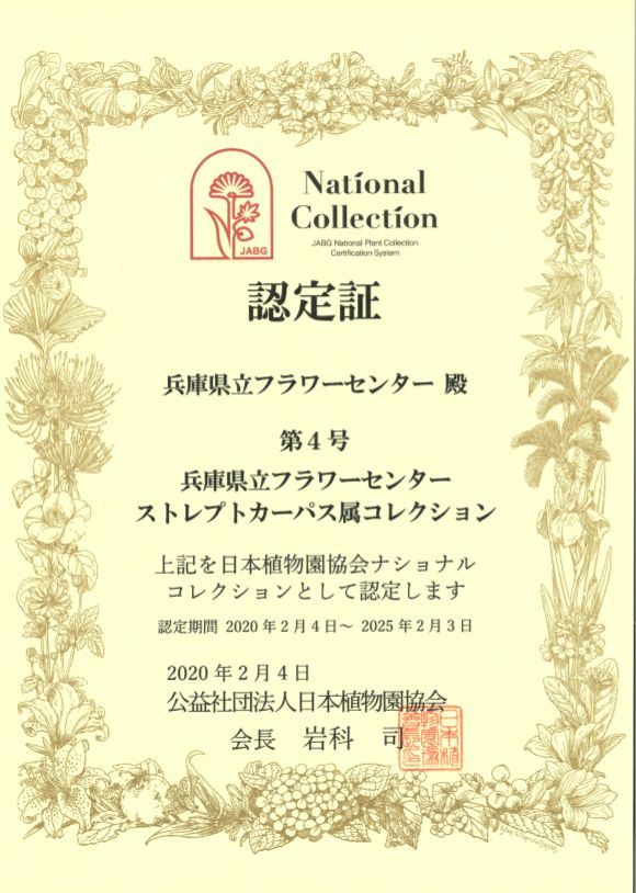 ナショナルコレクション認定証ストレプトカーパス