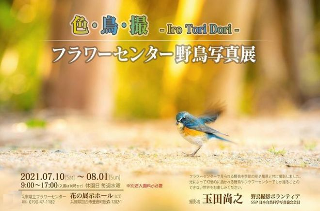 野鳥写真展 ボランティア 玉田